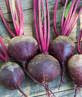 Beet, Moulin Rouge Hybrid, , large